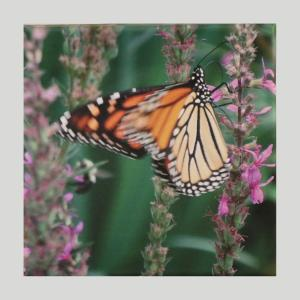 Butterfly Photo Canvas