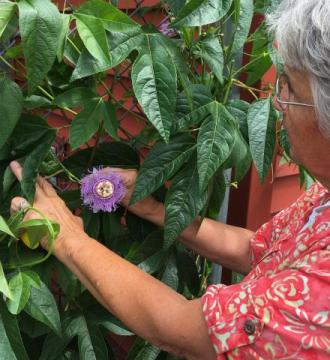Sister Mary admiring a passion flower outside the Food Pantry